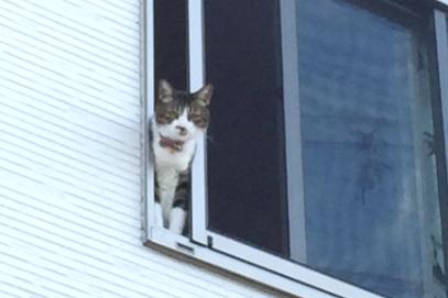 中古一棟アパートの窓から猫